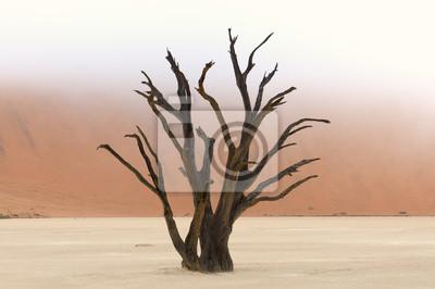Esqueletos de árboles, Deadvlei, Namibia