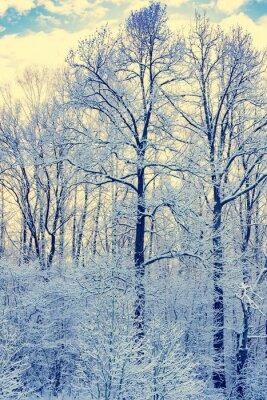 Póster Estanque no congelado en invierno