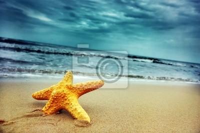 Estrellas de mar en la playa tropical