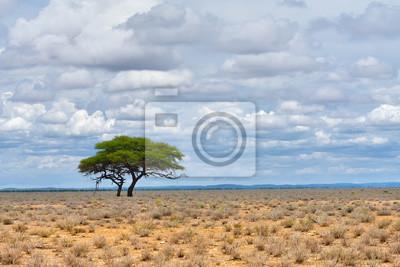 Etosha, Namibia, África