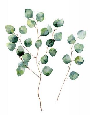 Póster Eucalipto del dólar de plata de la acuarela con las hojas y las ramificaciones redondas. Elementos de eucalipto pintados a mano. Ilustración floral aislado sobre fondo blanco. Para el diseño, la mater