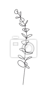 Póster Eucalyptus baby blue branch continuous line drawing. One line . Hand-drawn minimalist illustration, vector.