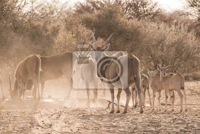 Familia de Eland en waterhole