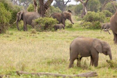 Póster Familia de elefantes en Kenia