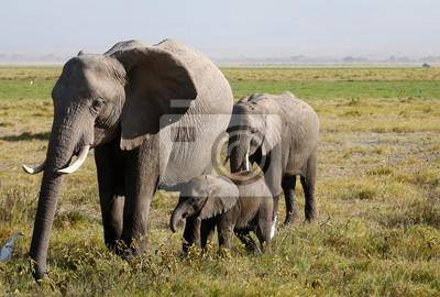 Familia de elefantes en la sabana africana