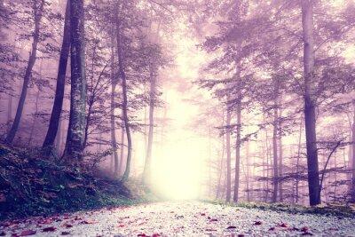 Póster Fantasía de color púrpura de color brumoso camino forestal. Paisaje soñador del bosque del color del cuento de hadas.