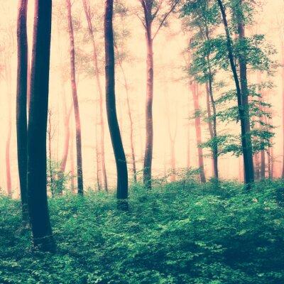 Póster Fantasía escena de luz bosque