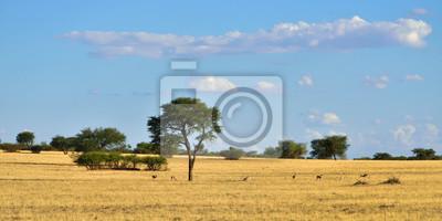 Fauna africana, desierto de Kalahari, Namibia