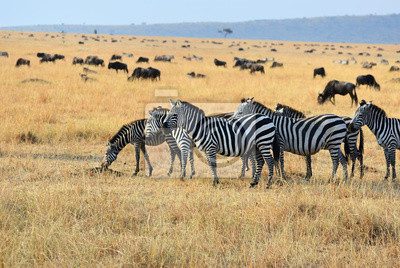 Fauna africana, Kenia