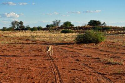 Fauna africana. Namibia