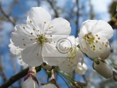 Póster flor