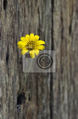 Flor amarilla en el agujero cerca de madera vieja