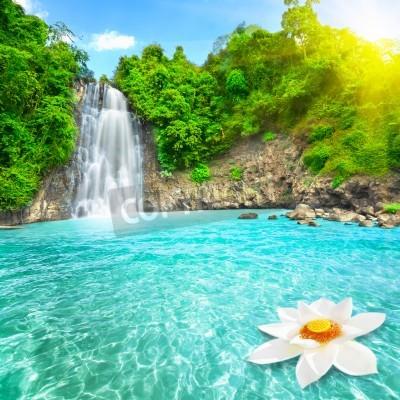 Póster Flor de loto en cascada de piscina