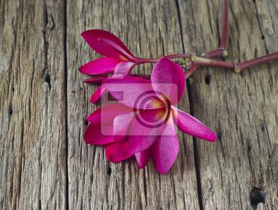 Flor del Frangipani Rojo en madera spa mesa