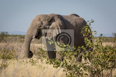 Flora y fauna en el Parque Nacional de Etosha, Namibia