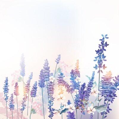 Póster Floral vector spring illustration with field flowers lavender, morning light