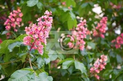Florecimiento de castañas de color rosa de caballos