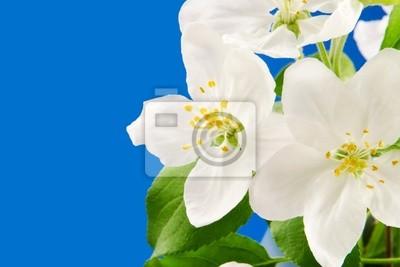 Póster Flores