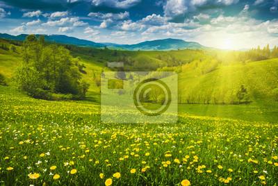 Flores amarillas en un prado de primavera