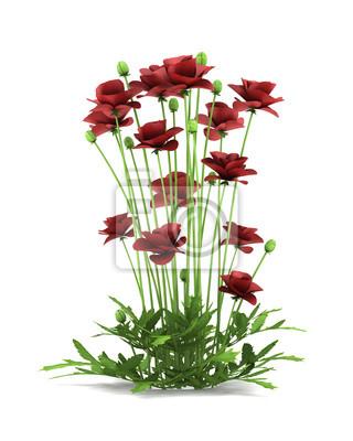 Flores De Amapola Iraní Aislados Sobre Fondo Blanco Carteles Para La
