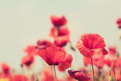Póster Flores de la amapola retro pacífica verano de fondo