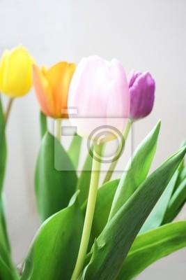 Flores de los tulipanes
