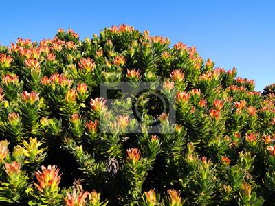 Flores en fondo verde del parque nacional namaqualand