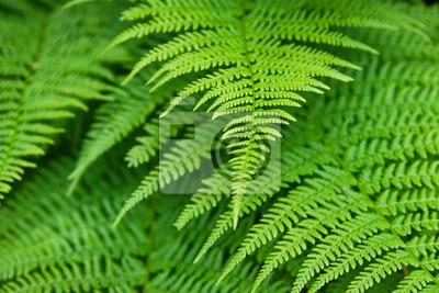 Follaje verde de cerca