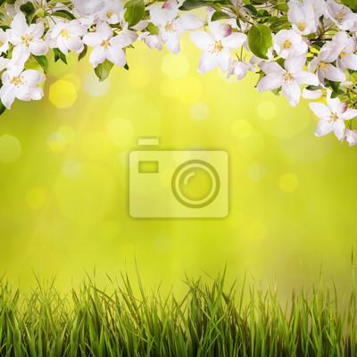 Fondo de la primavera