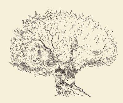 Póster Fondo de oliva de la vendimia Dibujado a mano ilustración