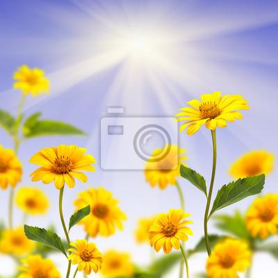 Fondo margarita amarilla