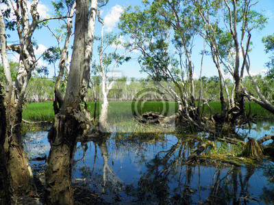 Forestal en el Parque Nacional de Kakadu