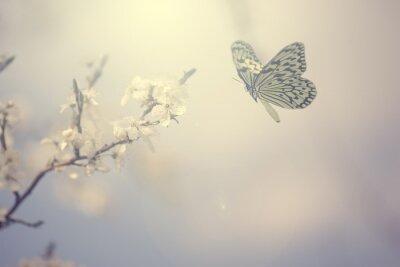 Póster Foto de color en colores pastel de la mariposa y flores de primavera