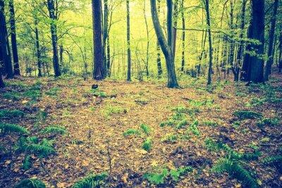 Póster Foto de la vendimia del paisaje otoñal del bosque