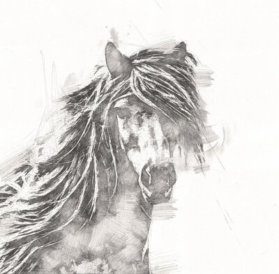 Póster freehand horse head pencil drawing