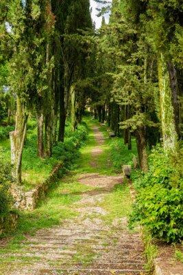 Póster frondosa avenida verde