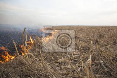 Fuego en el campo de los cultivos