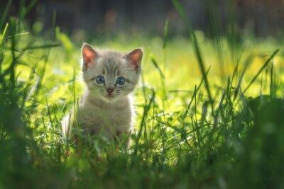 Póster gatito
