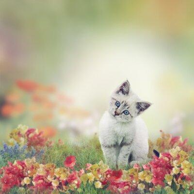 Póster Gatito blanco en Flores