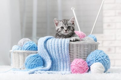 Gatito en una cesta con bolas de hilo
