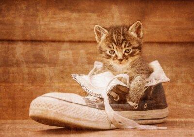 Póster Gatito que se sienta en un zapato, imagen del vintage