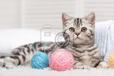 Gato con un ovillo de lana