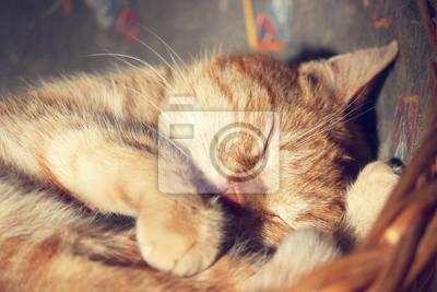 Póster gato duerme