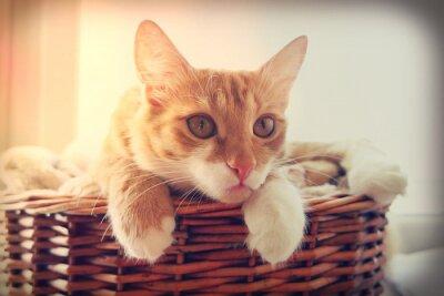 Póster Gato mirando