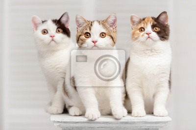 Gatos en el estante