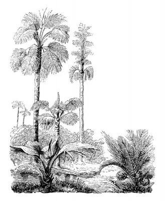 Póster Gebang and Nipa Palm Trees vintage illustration.