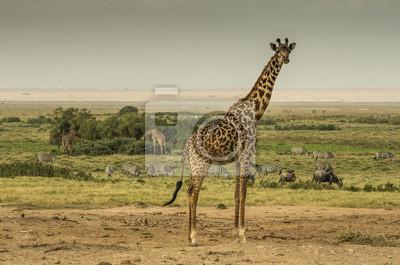 Giraffa, zebre e nella savana gnu