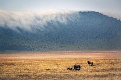 Gnus vagando dentro del cráter de Ngorongoro en Tanzania, África