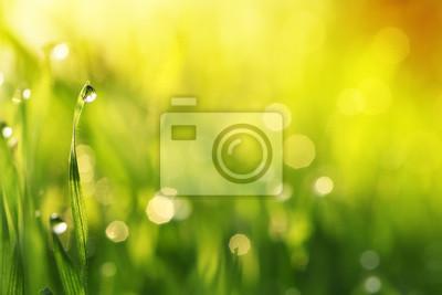 Gotas de agua sobre la hoja de la hierba