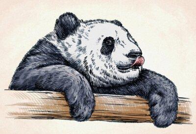 Póster Grabar tinta dibujar panda ilustración